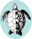 line drawing of green sea turtle